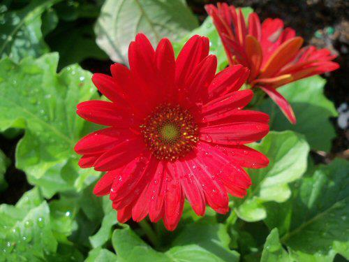 karen-flower