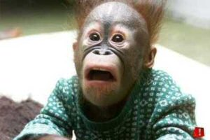 shocked_monkey
